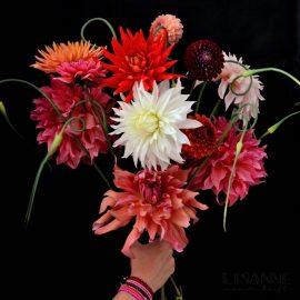 Flower Explosion | De Dahlia